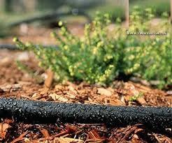 فروش انواع شیلنگ آب برای آبیاری بذر